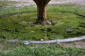 giardini gualdo