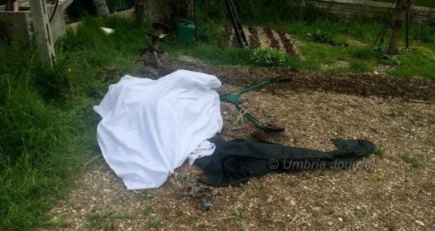 morto-viole-d-assisi-motozappa-620x330