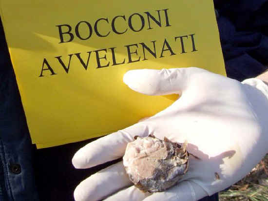 bocconi_avvelenati