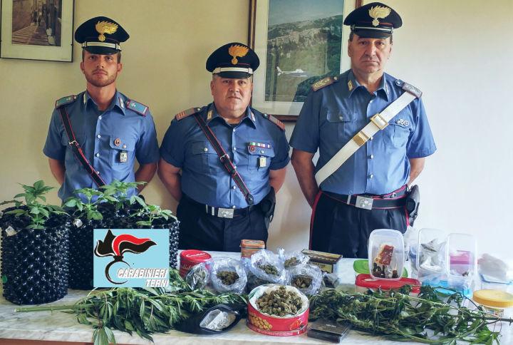 Avigliano umbro serra blindata di marijuana scoperta in for Egizi arredamenti avigliano umbro