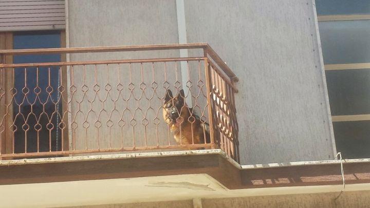 cane in terrazzo
