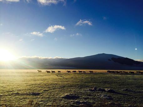 Cinquanta cavalli allo stato brado pascolano liberi sui Monti Sibillini a dispetto delle scosse di terremoto e in mezzo a un altopiano verde smeraldo, il Piano Grande, baciato dal sole, Castelluccio di Norcia (Perugia), 4 Novembre 2016. ANSA/ MICHELE GIUNTINI