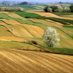 Agricoltura, aumentano i finanziamenti per il bando sullo sviluppo del settore agroalimentare: finanziata tutta la graduatoria