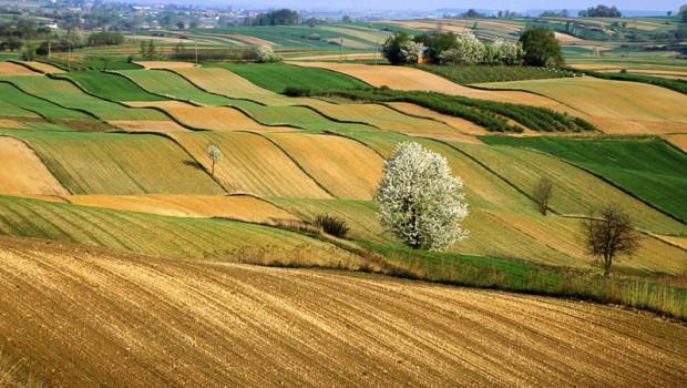 agricoltura-620x350