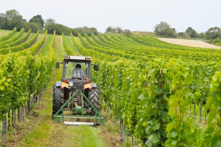 Agricoltura Umbria