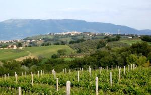 Montefalco_Sagrantino
