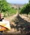 """Montefalco, non si spengono i riflettori sul vino grazie ai """"Weekend della Strada del Sagrantino"""""""