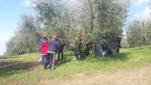 bambini olivo