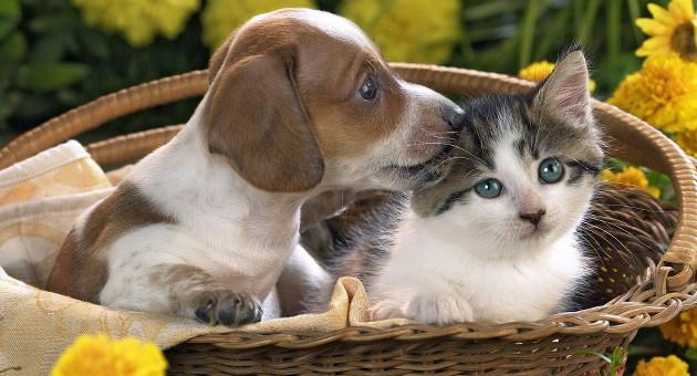 animali-affezione_pets