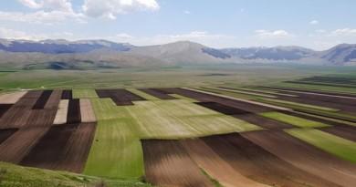 Pianna di Castelluccio di Norcia in semina