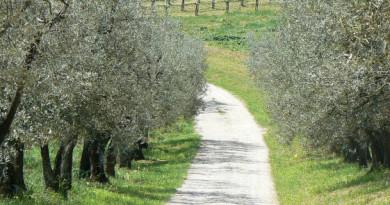 olivi frantoio batta