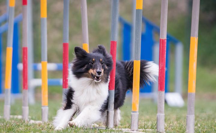 Foto Agility Dog Centro Martinelli