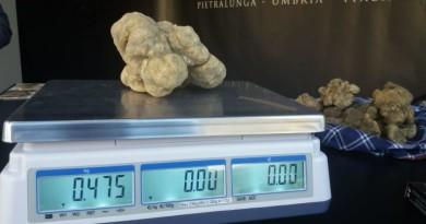 il tartufo bianco da mezzo chilo