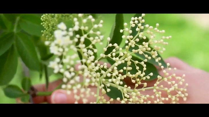 festa delle erbe 1
