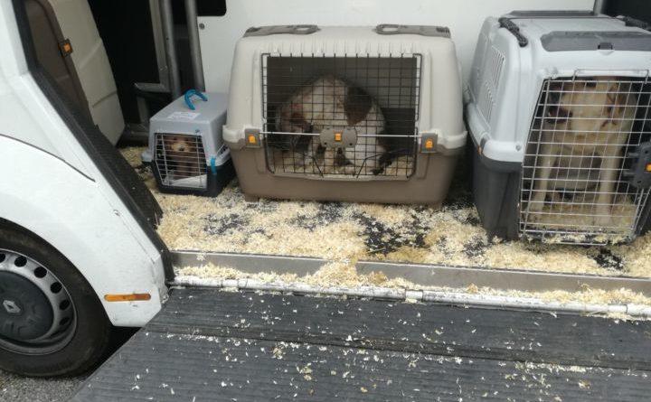 Bloccato in A1 un trasporto abusivo di cani dalla Polizia di Stato