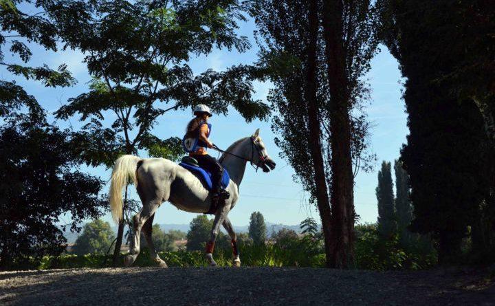 Causa Covid la Mostra Nazionale del Cavallo dà appuntamento al 2021