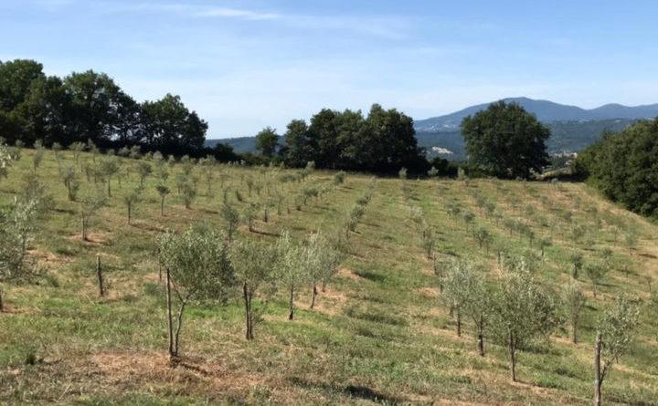 Lugnano in Teverina, nuovi progetti per collezione mondiale ulivi
